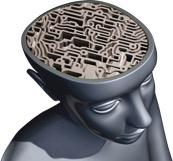 мозги Соннакса
